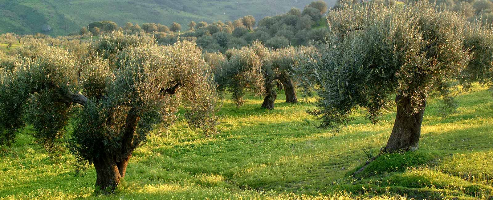 Offerte Last Minute - Pomelie Agency Holiday Rentals in Sicily
